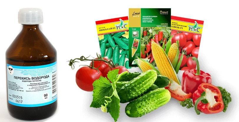 Как прорастить семена огурцов: пошаговая инструкция для начинающих. советы садоводов и огородников + 115 фото