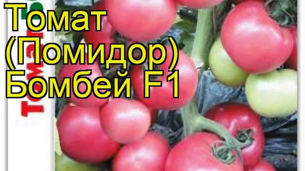 Разработанный японскими селекционерами томат «диаболик»: чем хорош и почему полюбился отечественным фермерам