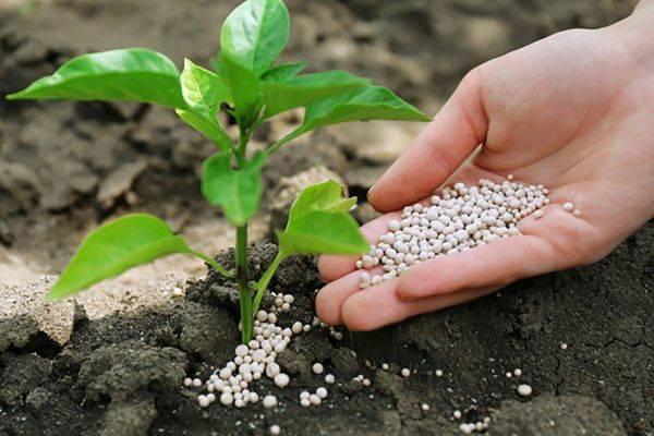 Суперфосфат: инструкция по применению удобрения
