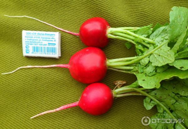 Прекрасный сорт для огородников с любым опытом: всё о редисе «дуро краснодарское»