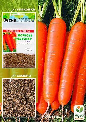 Скороспелые сорта моркови: 25 лучших с описанием и характеристиками + фото