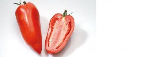 Характеристика и описание сорта томата корнабель, его выращивание - общая информация - 2020