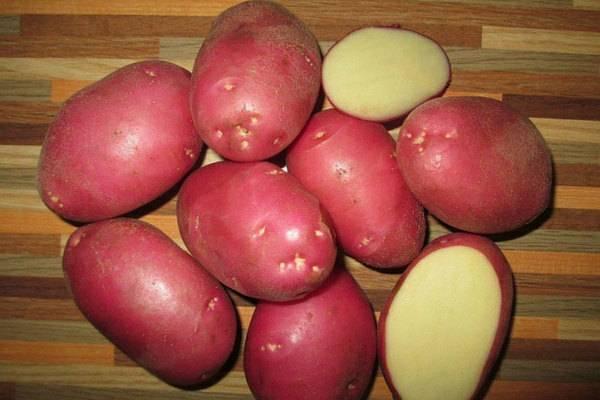 Характеристика картофеля сорта лабадия