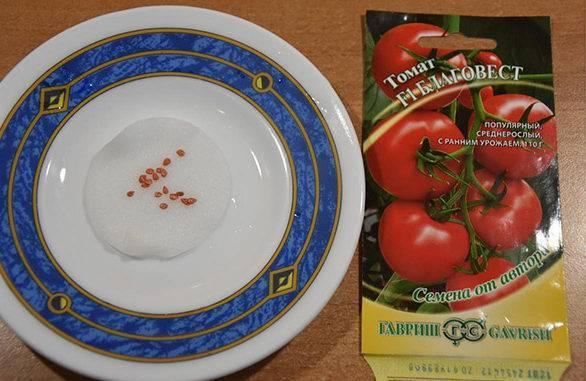 Семена помидора подготовка к посадке