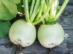 Редька: фото растения, что это за овощ, как выглядят соцветия, плод, семена и корневая система, к какому семейству относится, родина, классификация сортов