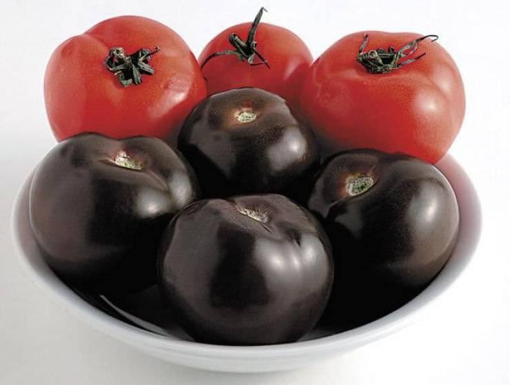 Черные помидоры — сорта