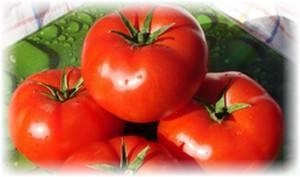 Отличные салатные помидоры сорта бобкат