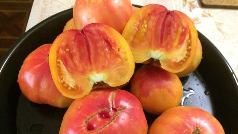 Сорт томата медовый салют