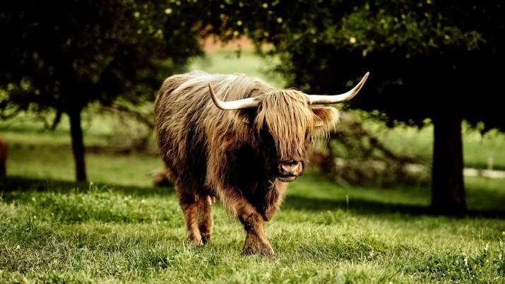 Видят ли быки. различают ли быки цвета. цвет не играет роли