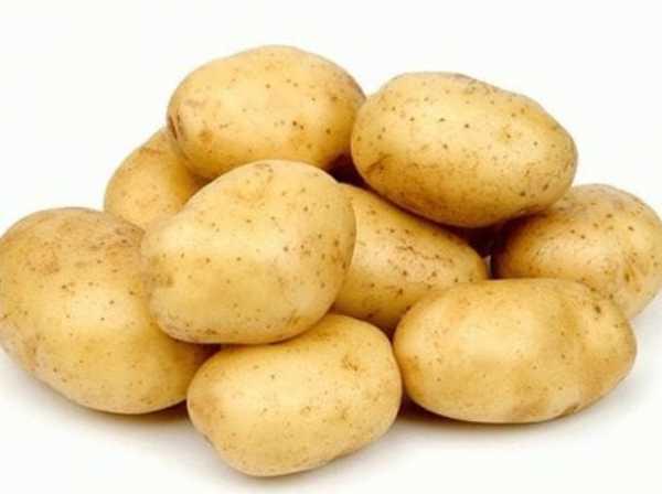 Выбор садоводов центрального и северного регионов — картофель диво: описание сорта и отзывы