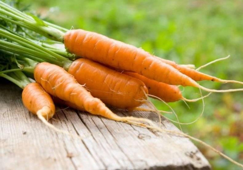 Морковь вита лонга: описание сорта, характеристики, вкусовые качества, выращивание