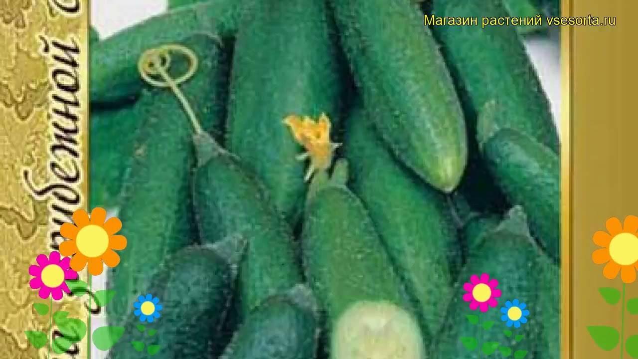 Огурец «либелле f1»: описание гибридного сорта, фото и отзывы