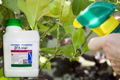 Хорус — противогрибковое средство для винограда