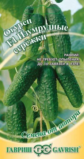 Огурцы изумрудные сережки f1: особенности выращивания