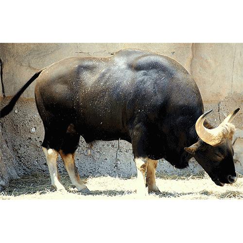Животные джунглей. описание, названия и особенности животных джунглей | животный мир