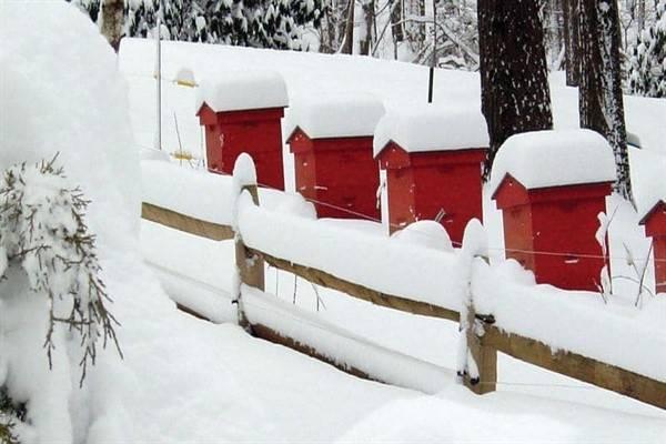 Утепление ульев — зимуем на улице