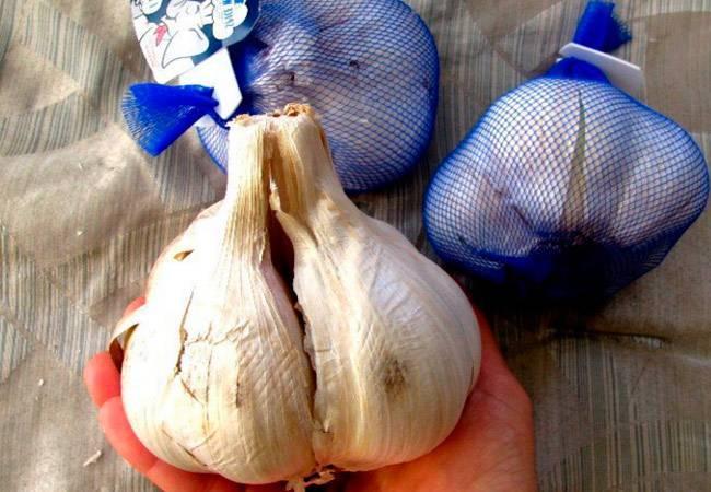 Необычный лук-чеснок рокамболь и советы по его разведению