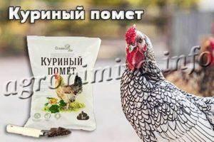 Куриный помет как удобрение: как применять, преимущество органических подкормок