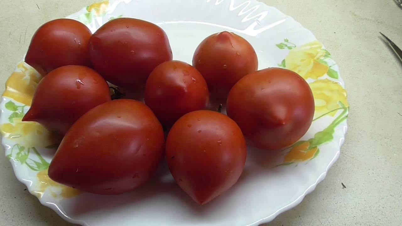 Клубничное дерево, деревья и томаты с таким названием