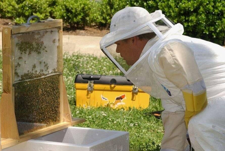 Когда и для чего объединяют пчел с разных ульев