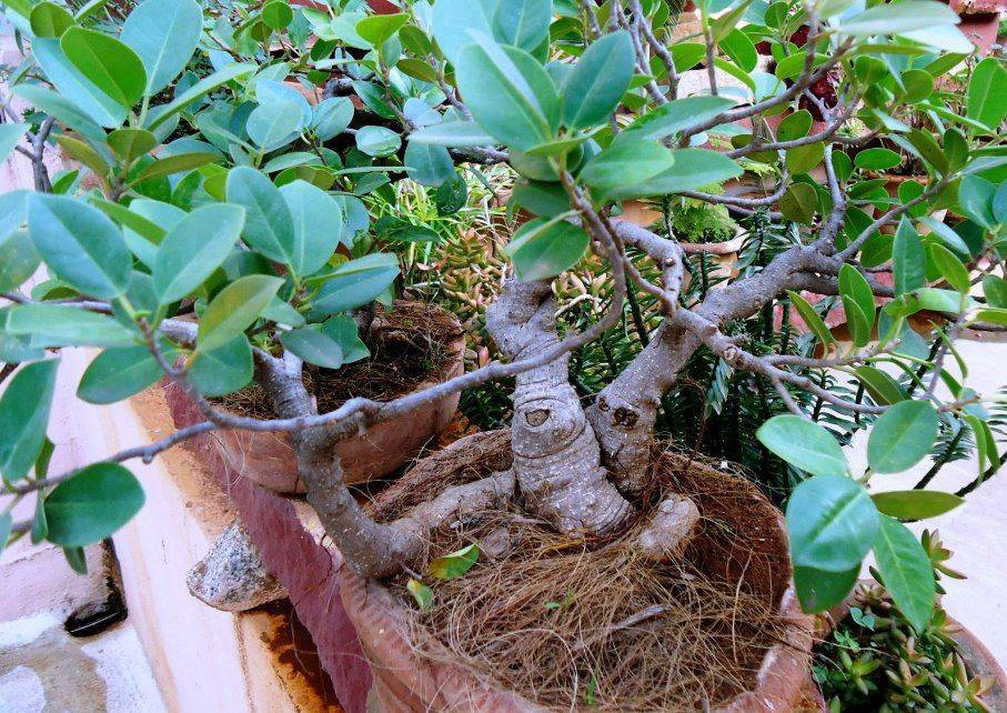 Что представляет собой растение арахиса и как оно растет на огороде и в домашних условиях?