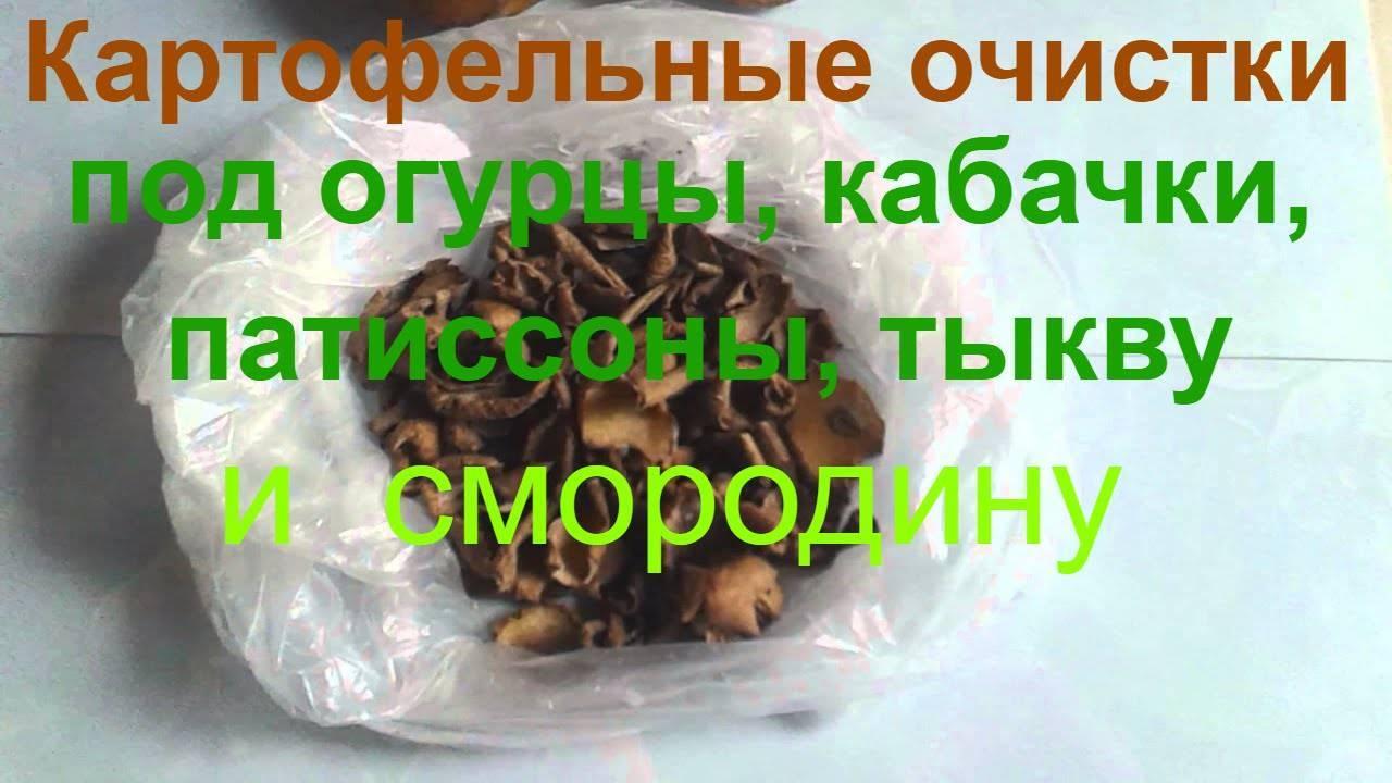 Подкормка смородины: удобрения которые всегда под рукой