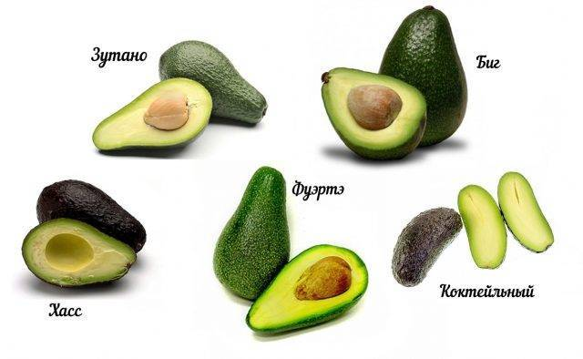 Авокадо: виды и сорта, фото и описание
