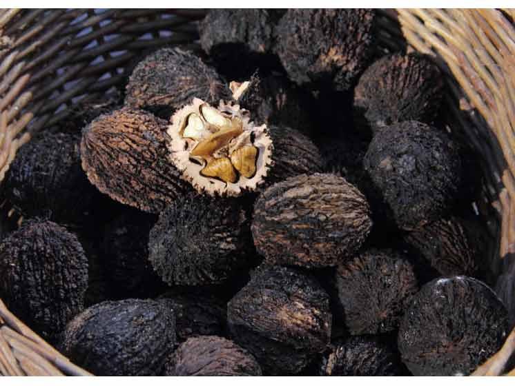 Настойка из маньчжурского ореха: рецепты