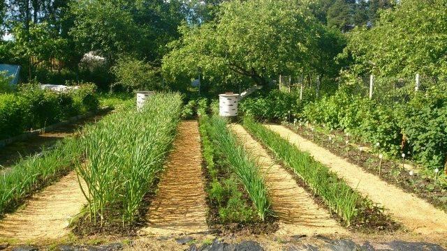 Дорожки между грядками в огороде