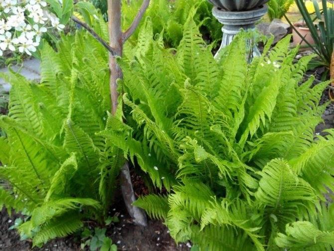 Растения лесной зоны: фото и названия, какие есть лесные травянистые растения и цветы