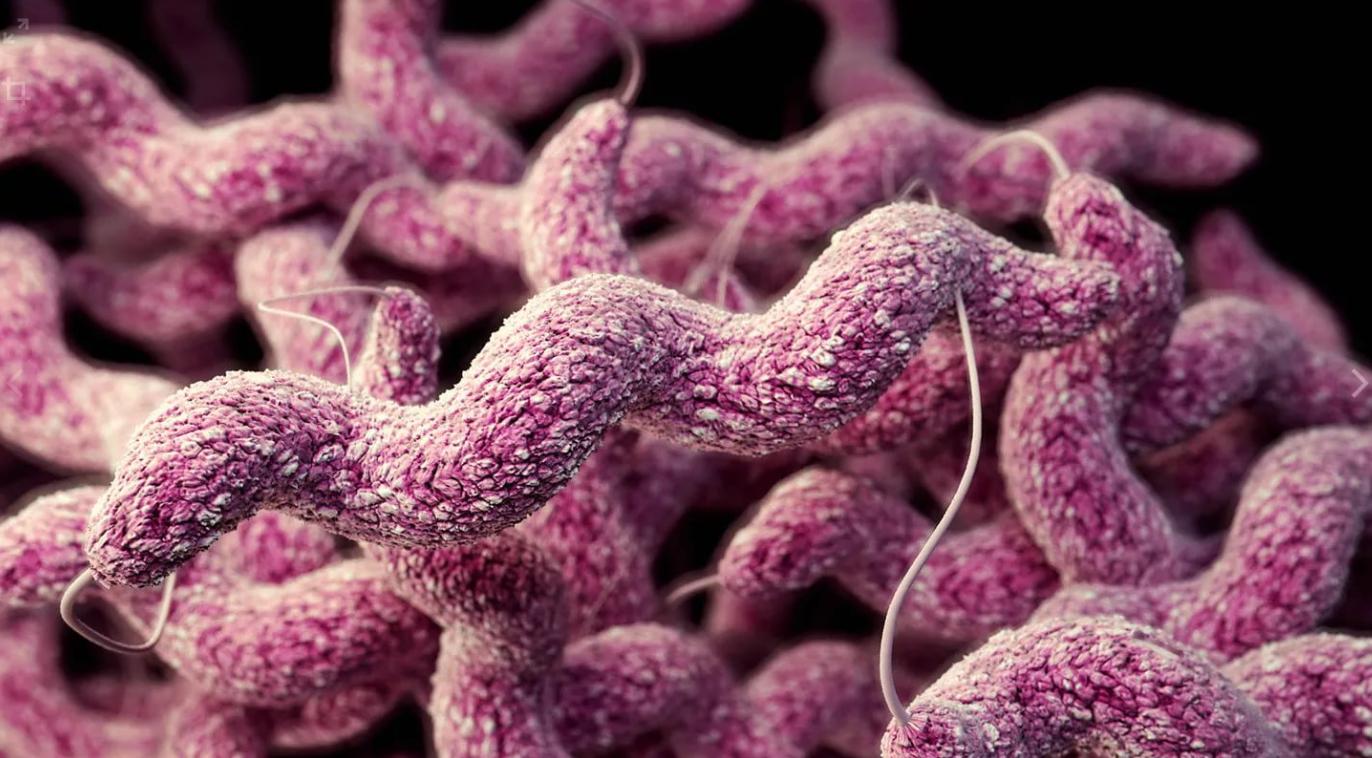 Методы профилактики, лечения некробактериоза крупного рогатого скота 2020