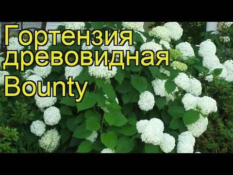 Гортензия на урале: подходящие сорта, секреты выращивания, посадки и ухода