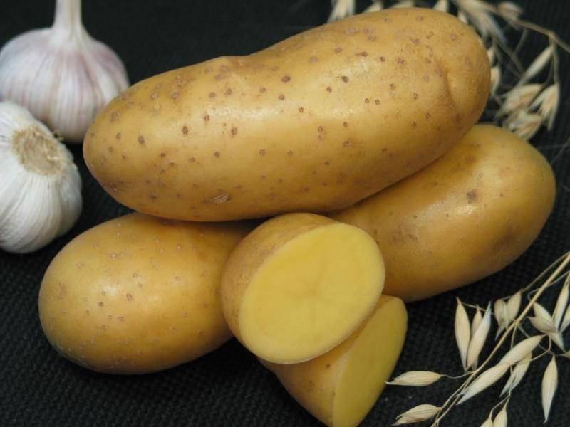 Картофель лада описание сорта. картофель из семян.