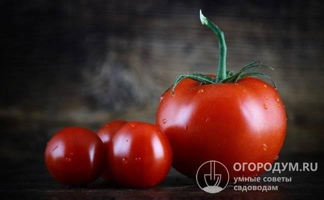 Томат каспар: описание сорта и рекомендации по выращиванию