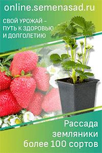 Малина гордость россии: отзывы садоводов