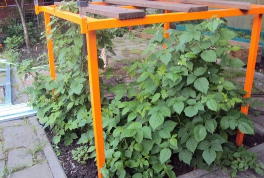 Шпалера для малины — оптимальный способ для ухода за растением