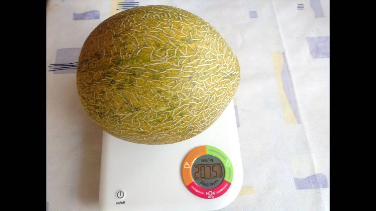 Вьетнамская дыня. полосатая экзотика - огород
