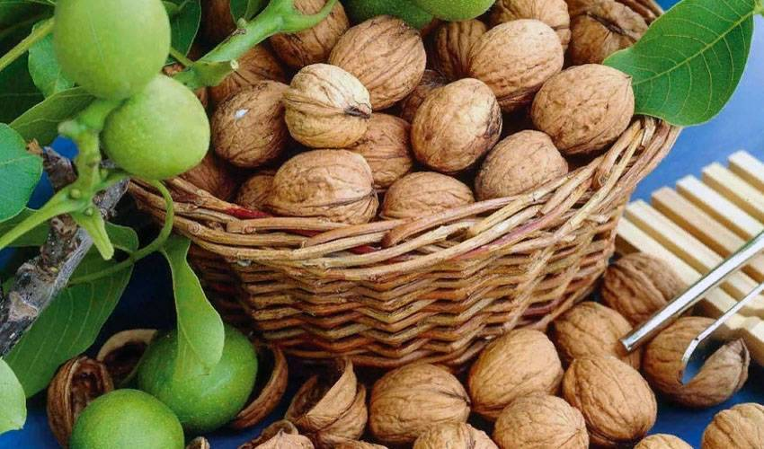 Как подсушить грецкие орехи в духовке