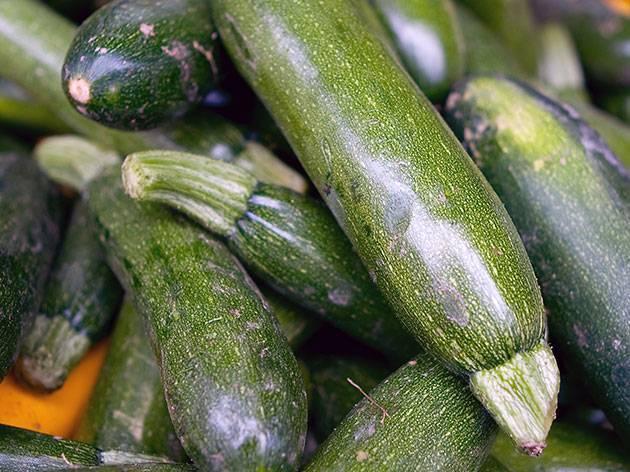 Семена кабачков: лучшие сорта для открытого грунта - 50 лучших сортов!