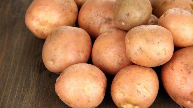 Барин — чипсовый картофель для климата центрального региона