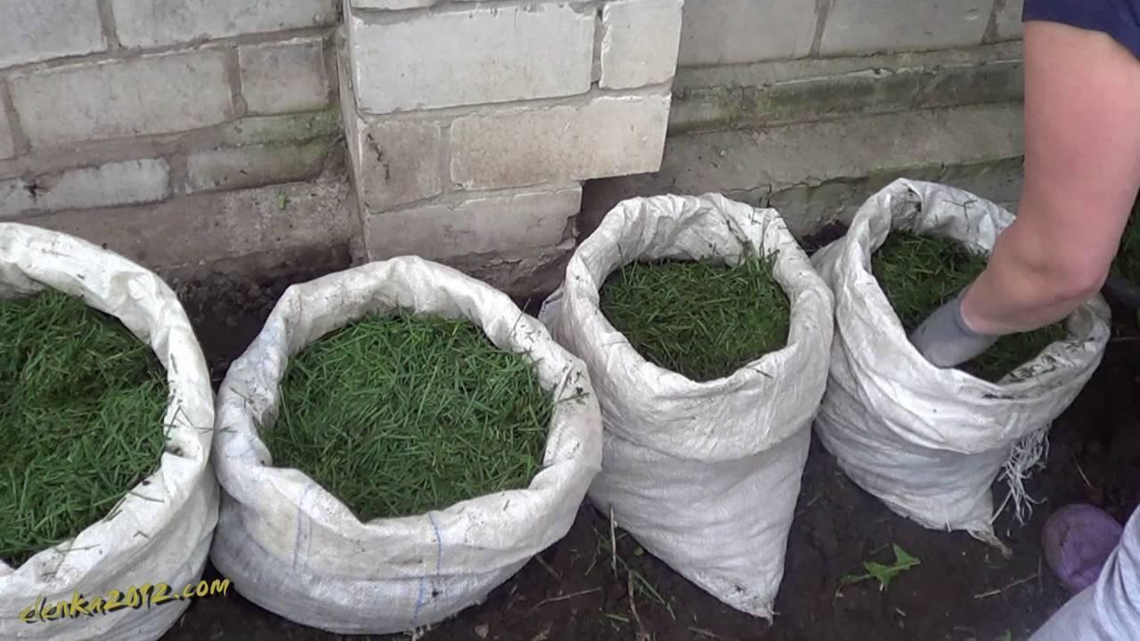 Пошаговая технология выращивания картофеля в мешках