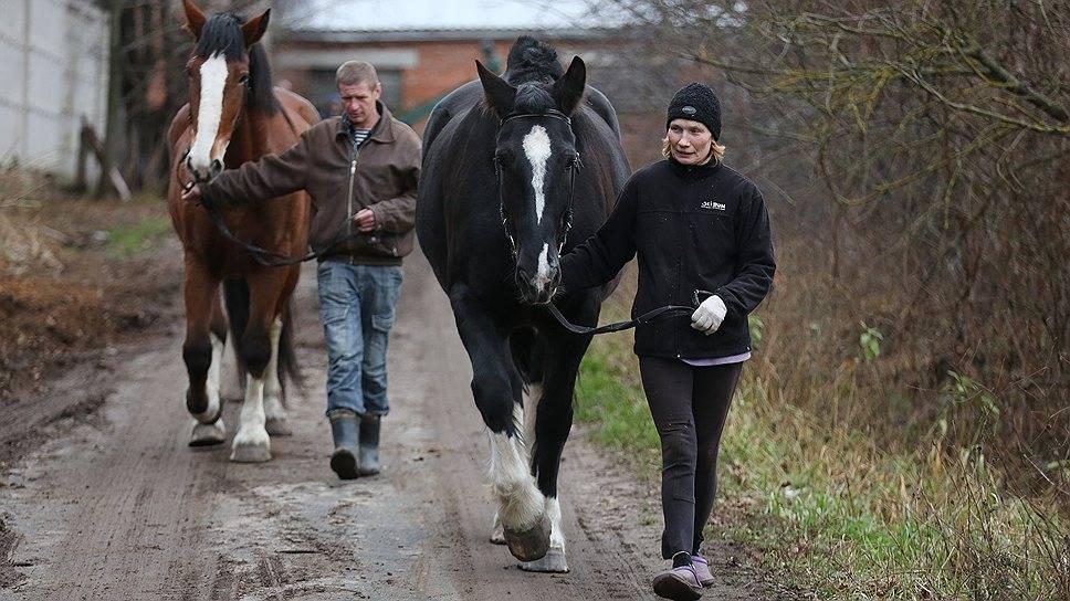 Лошадь породы владимирский тяжеловоз (34 фото): характеристика породы и ее сфера деятельности. особенности разведения и содержания