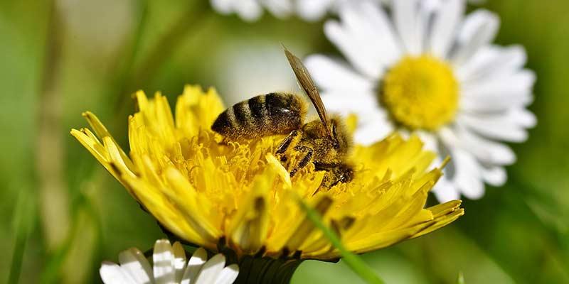Как пчелы делают мед из пыльцы — тонкости процесса сбора и приготовления