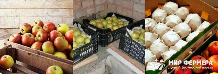 Как сохранить яблоки свежими дома до нового урожая