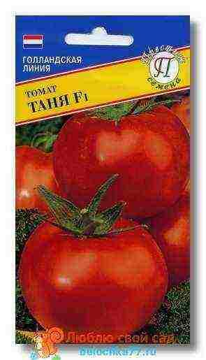 Как выбрать помидоры голландской селекции?