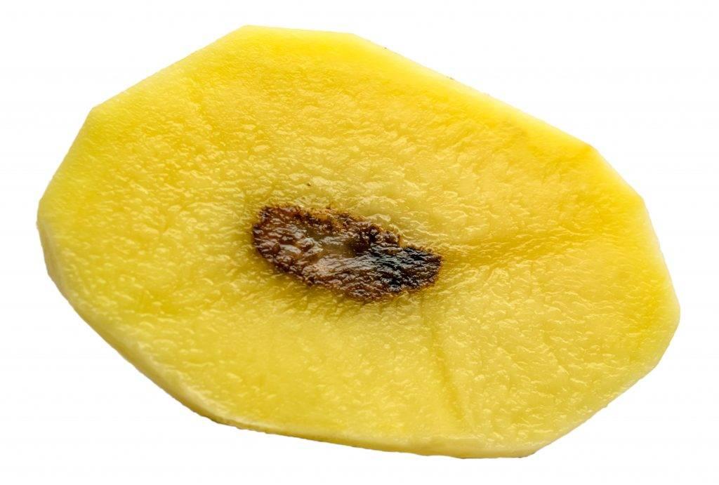 Опасная болезнь или ошибки ухода? почему картошка внутри чернеет?