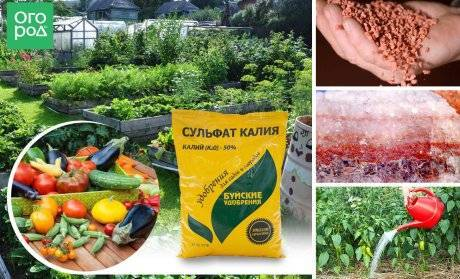 Удобрения в хелатной форме – что это такое и чем они полезны для растений