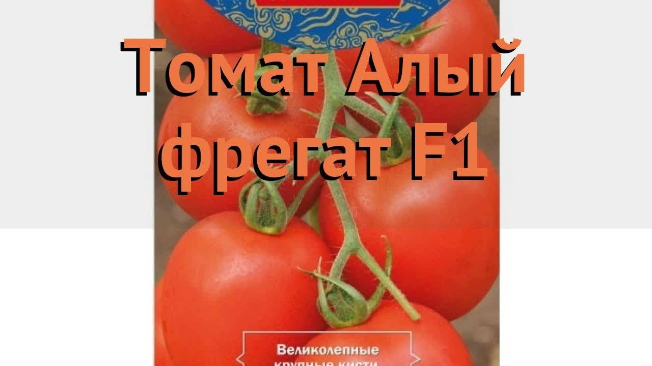 Томат алый фрегат f1: описание и характеристика сорта, урожайность с фото