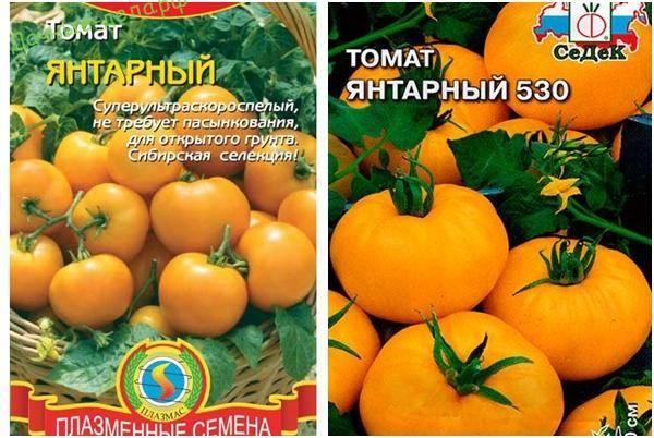 Характеристика и описание томата «янтарный»
