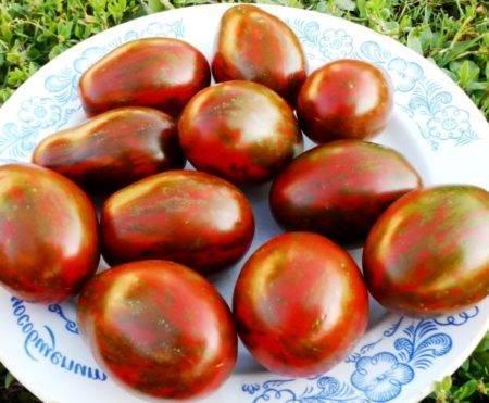 """Томат """"мавр черный"""": характеристика и описание сорта помидор, другое название  томата """"мавр"""", особенности ухода, фото и достоинства"""